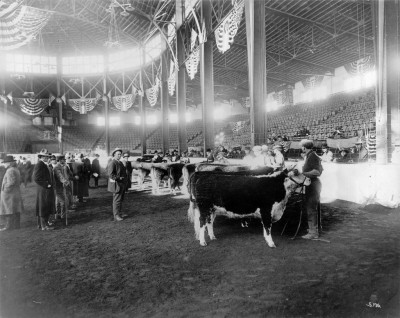 Superbowl of Cattle Shows