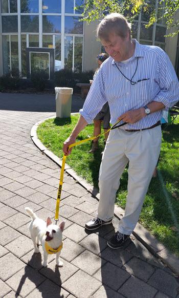 OTL Dog Walking Mark