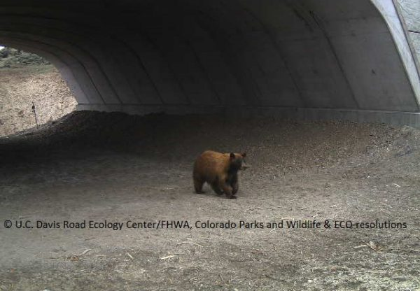bear crossing State Highway 9