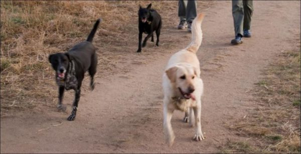 dogs running off-leash at Cherry Creek State Park