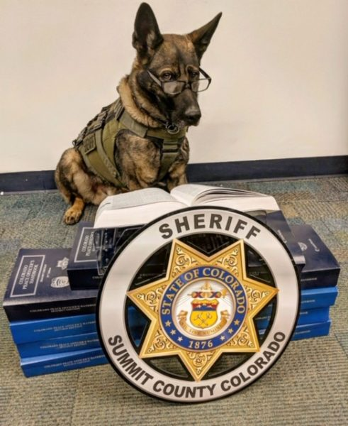 Summit County Colorado Sheriff - K9 Danny