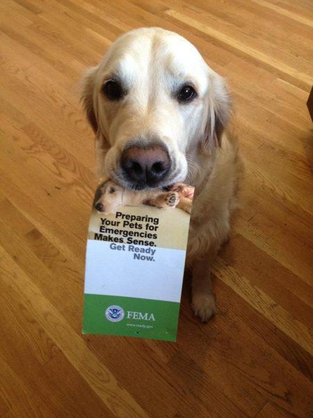 pets FEMA disaster plan